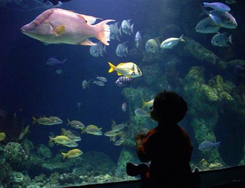 Ultimate aquariums in south Africa